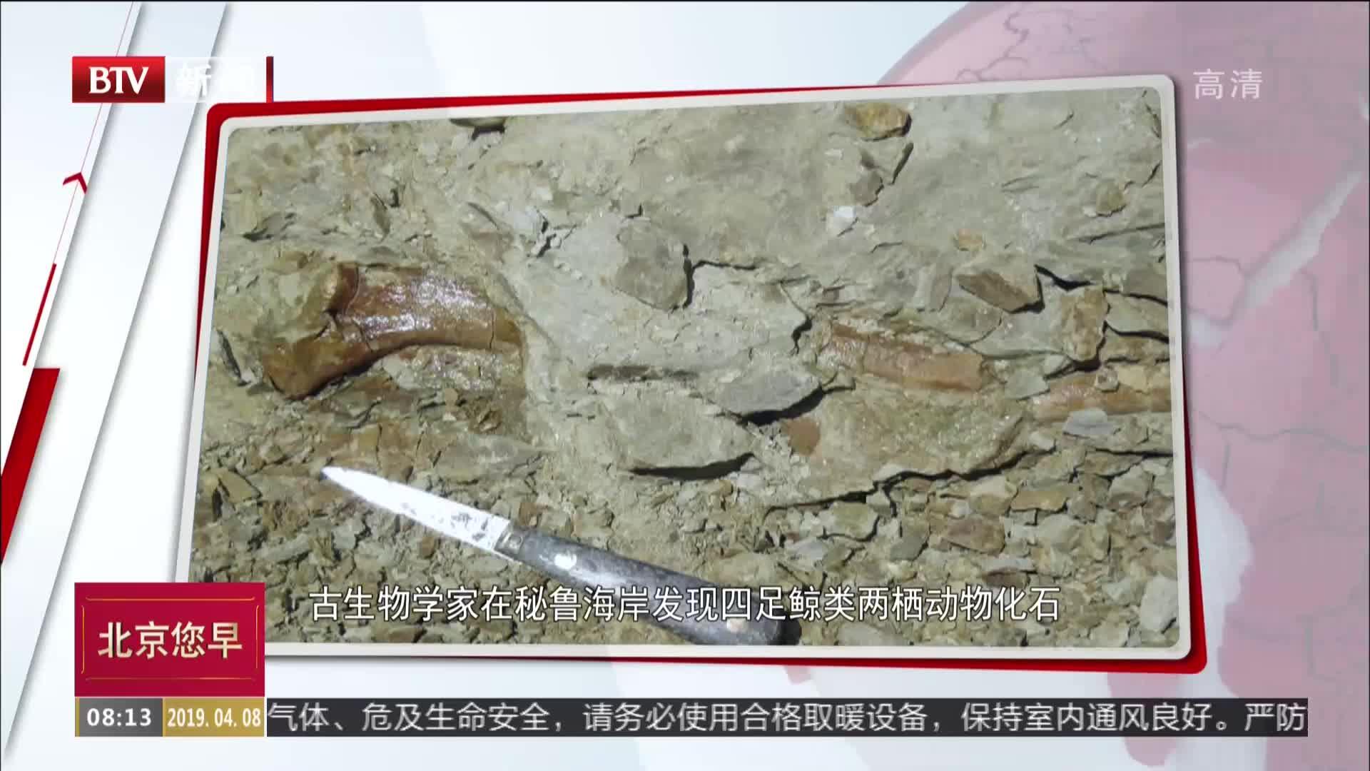 [视频]古生物学家在秘鲁海岸发现四足鲸类两栖动物化石