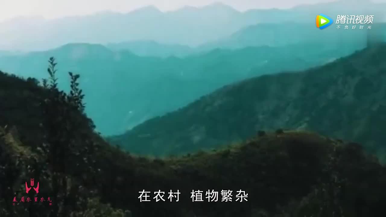 [视频]丑陋的外表却有最金贵的心——松树菌