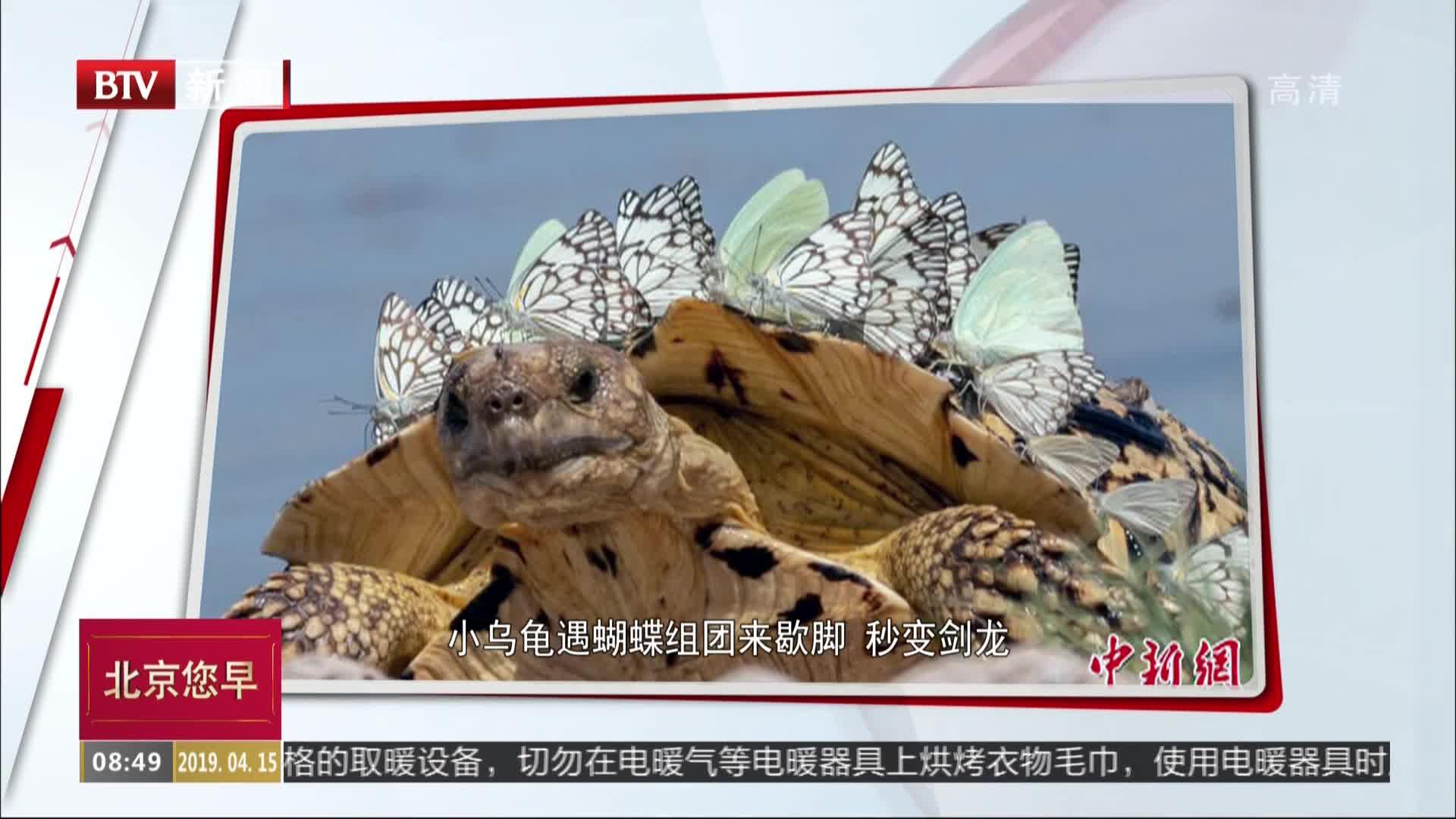 [视频]小乌龟遇蝴蝶组团来歇脚 秒变剑龙