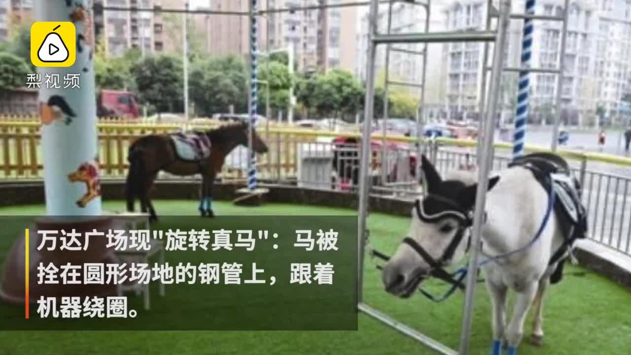 """[视频]成都惊现""""旋转真马"""" 网友怒斥残忍"""