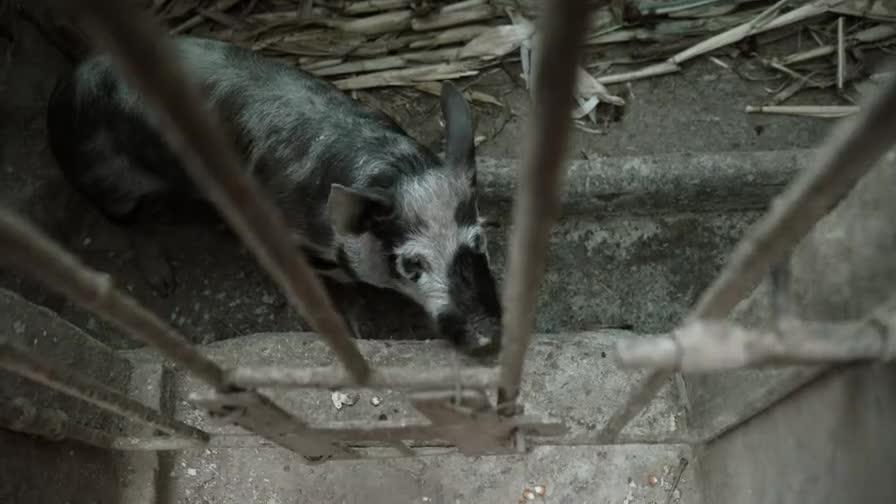 [视频]《啥是佩奇》午夜刷屏:硬核小猪带你寻找完美亲情