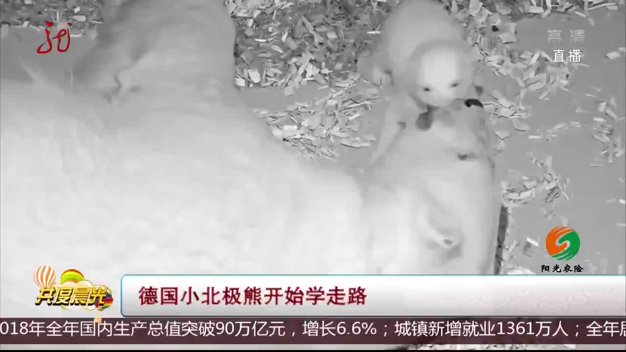 [视频]德国小北极熊开始学走路