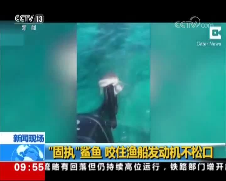 """[视频]""""固执""""鲨鱼 咬住渔船发动机不松口"""