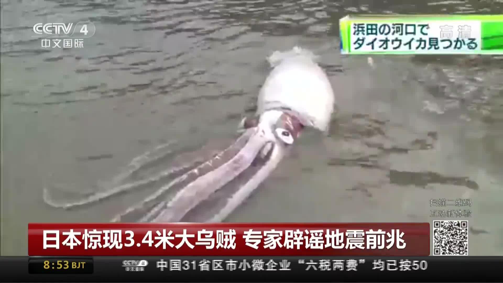 [视频]日本惊现3.4米大乌贼 专家辟谣地震前兆