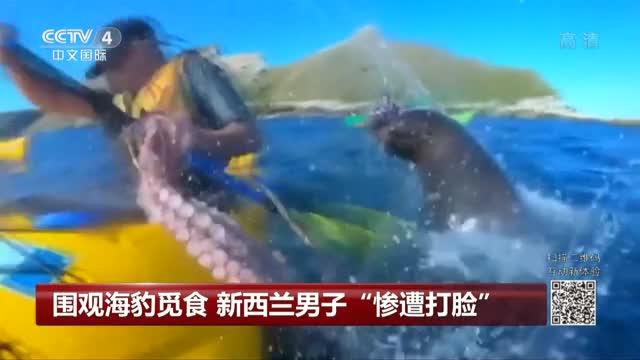 """[视频]男子围观海豹觅食 它跃出水面一记""""章鱼打脸"""""""