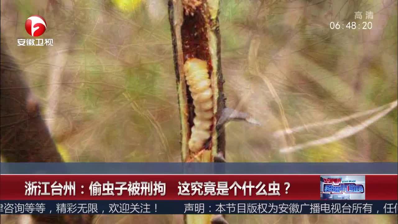 [视频]浙江台州:偷虫子被刑拘 这究竟是个什么虫?