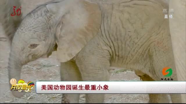[视频]美国圣迭戈动物园诞生最重小象