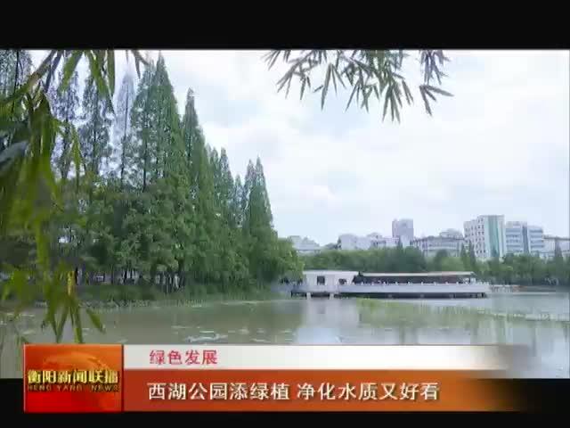 绿色衡阳:西湖公园添绿植 净化水质又美观