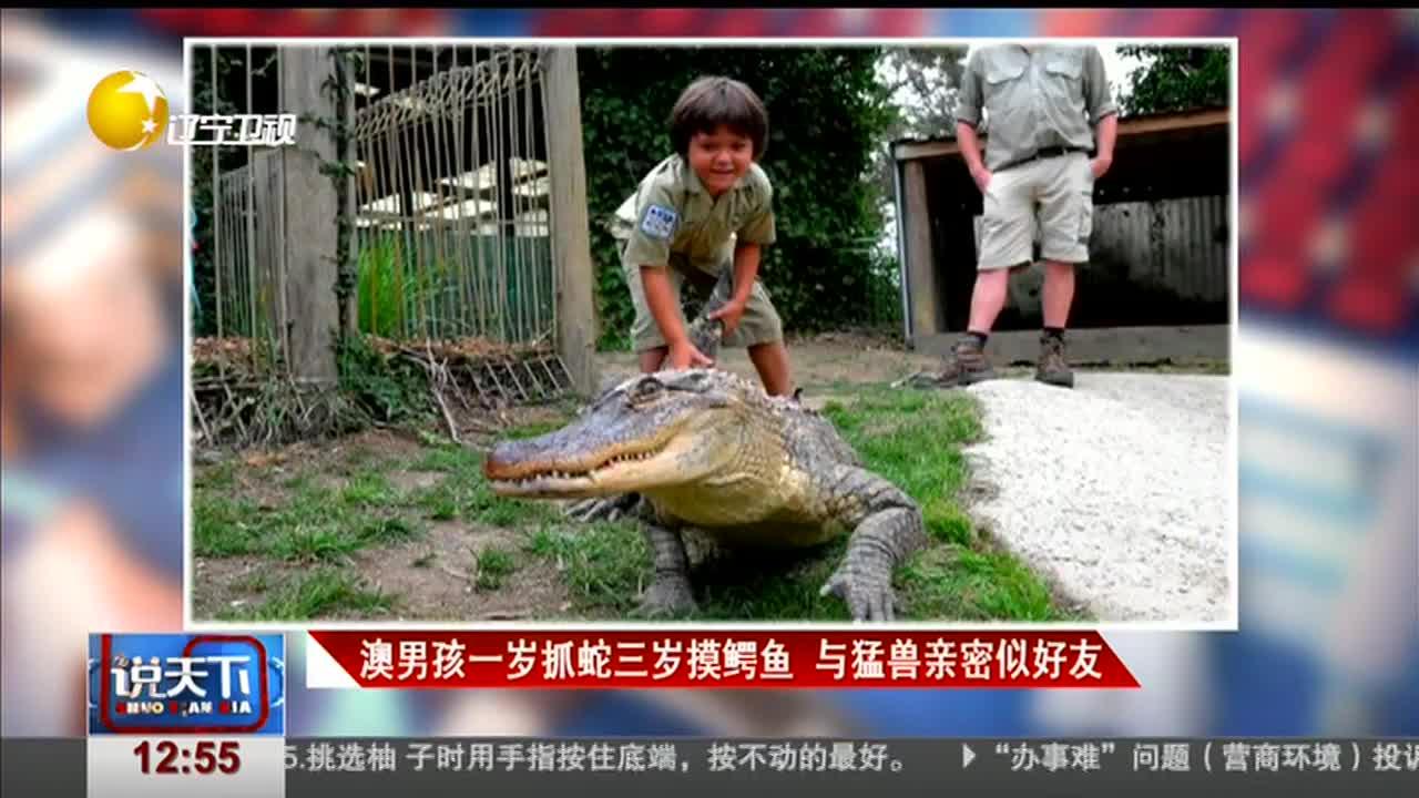 [视频]澳男孩一岁抓蛇三岁摸鳄鱼 与猛兽亲密似好友