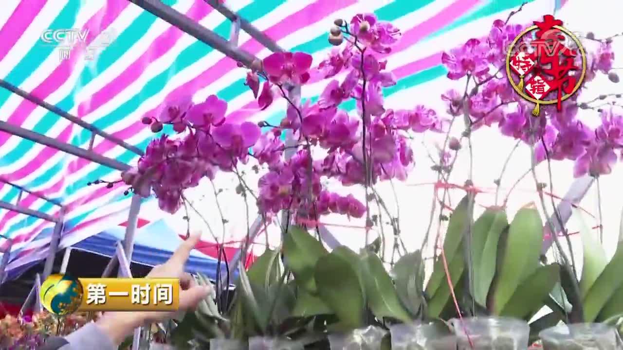 [视频]香港:逛年宵花市 品浓浓年味