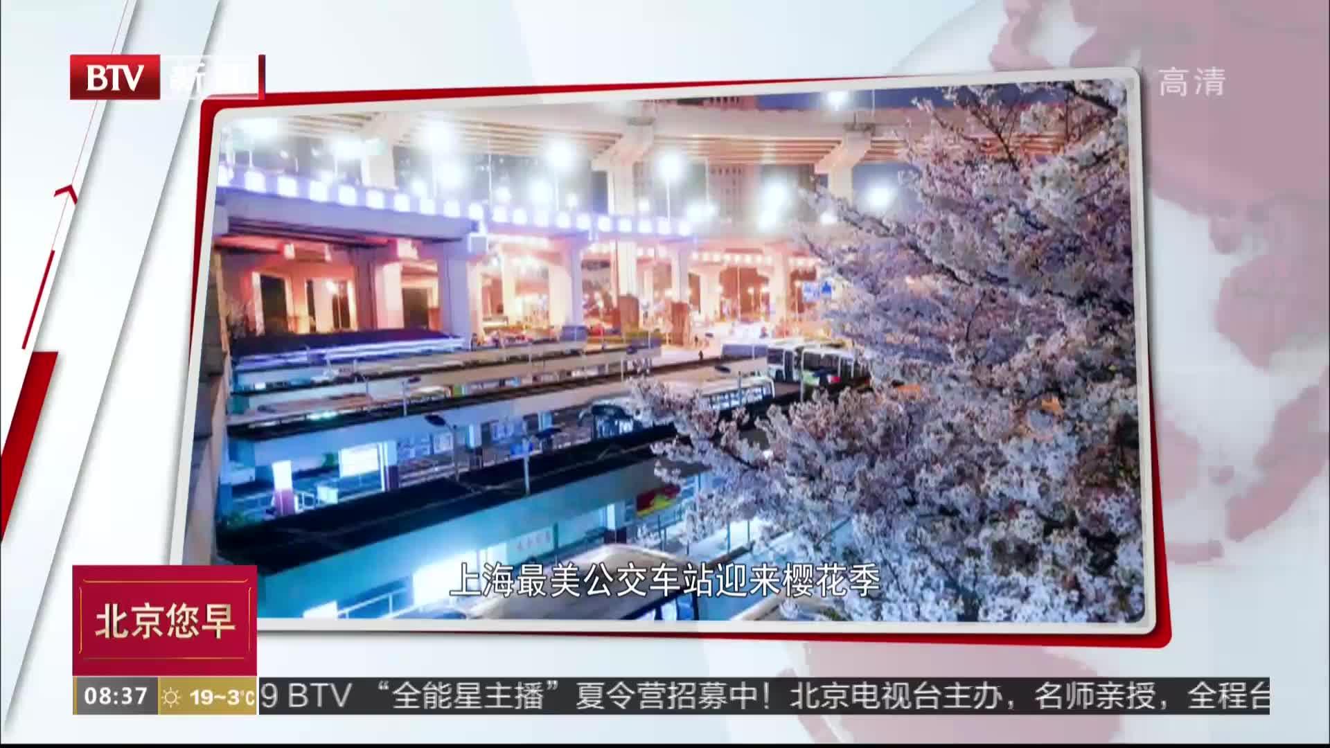 [视频]上海最美公交车站迎来樱花季 缤纷夜景成打卡圣地