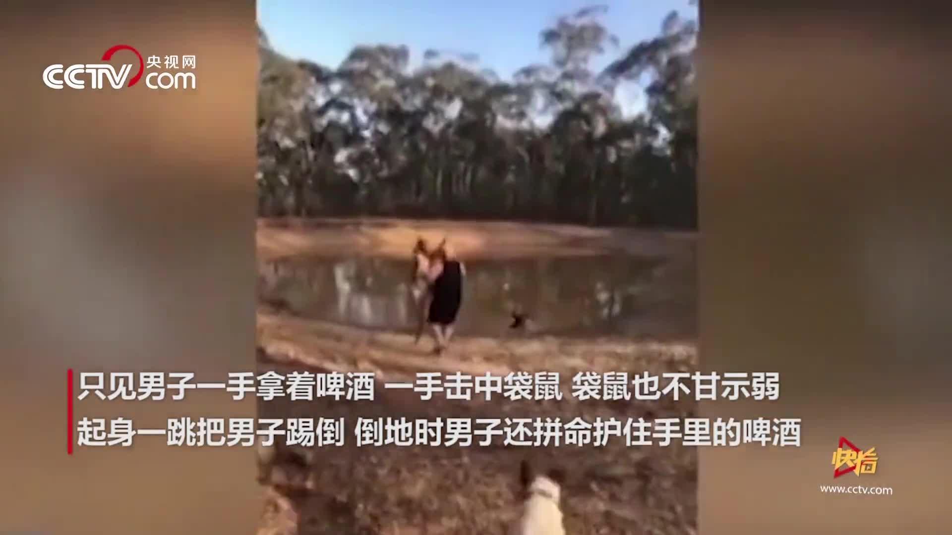 """[视频]男子手持酒瓶与袋鼠互殴 被""""旋风脚""""踹倒一秒KO"""