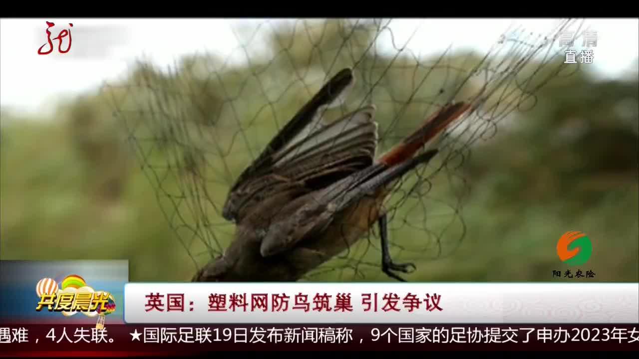 [视频]英国:塑料网防鸟筑巢 引发争议