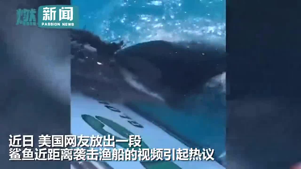 [视频]男子捕鱼满载而归 鲨鱼冲出水面劫走扬长而去