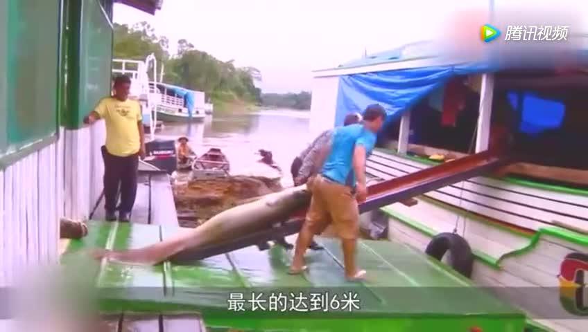 [视频]世界上第一种因为蠢而灭绝的鱼