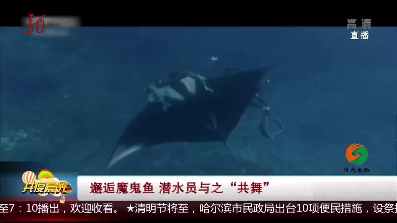 """[视频]邂逅魔鬼鱼 潜水员与之""""共舞"""""""