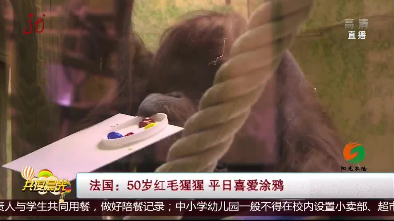 [视频]法国:50岁红毛猩猩 平日喜爱涂鸦