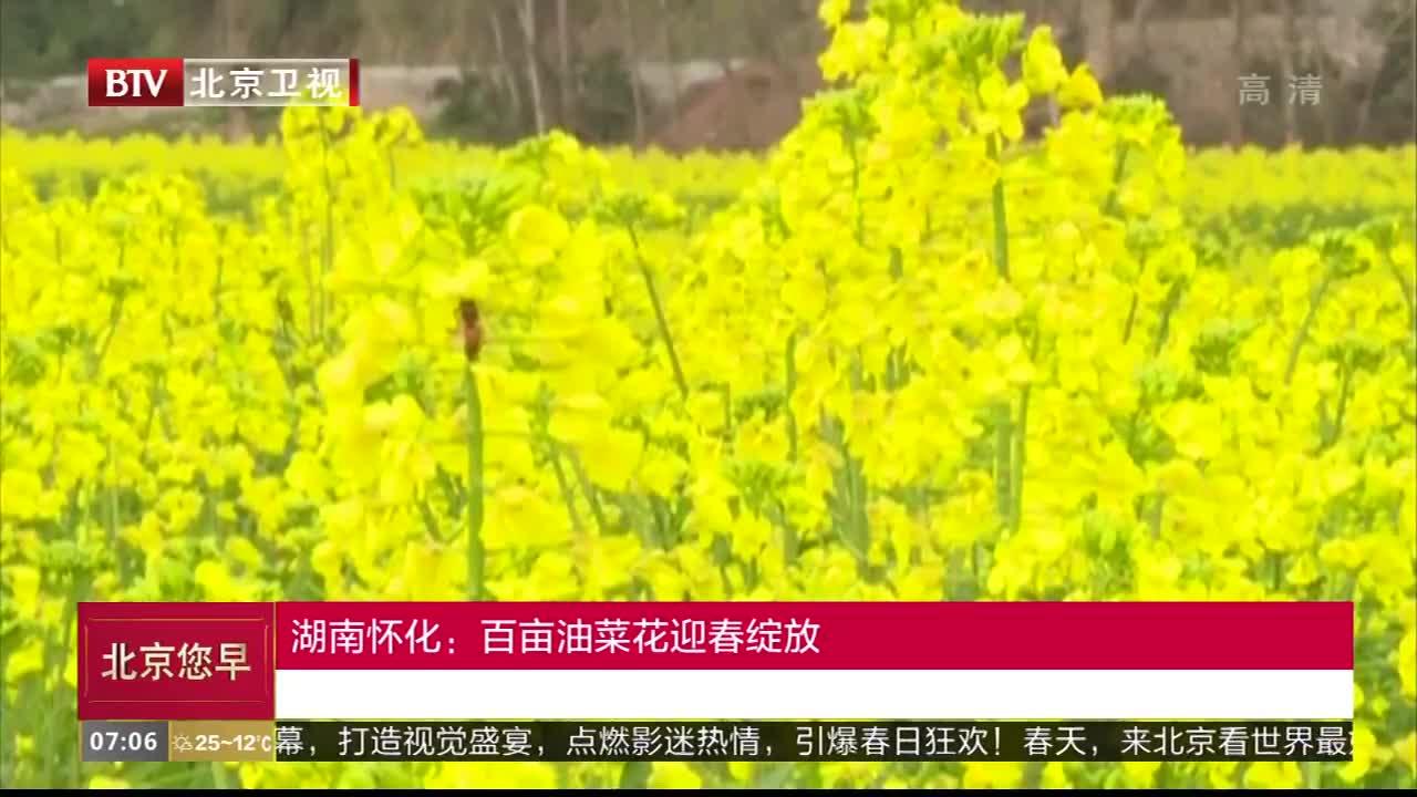 [视频]湖南怀化:百亩油菜花迎春绽放