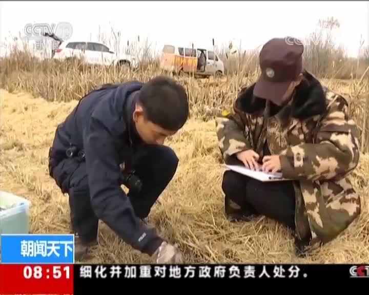[视频]黑龙江 农田里发现野生东北虎