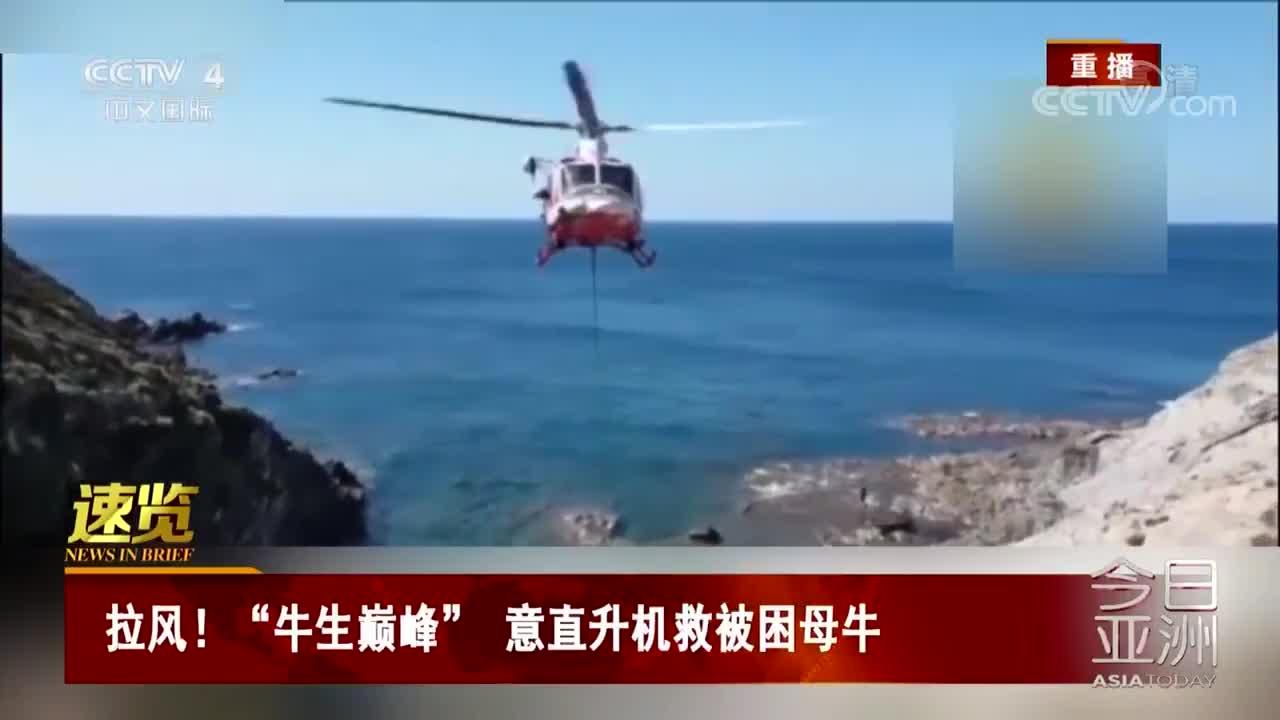 """[视频]拉风!""""牛生巅峰"""" 意直升机救被困母牛"""
