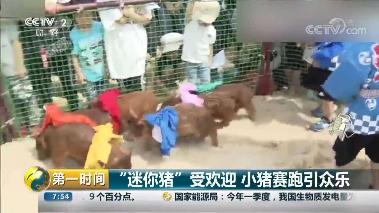 """[视频]""""迷你猪""""受欢迎 小猪赛跑引众乐"""