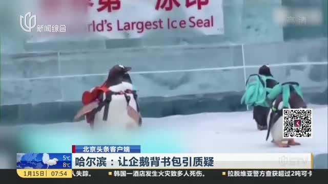 [视频]哈尔滨:让企鹅背书包引质疑