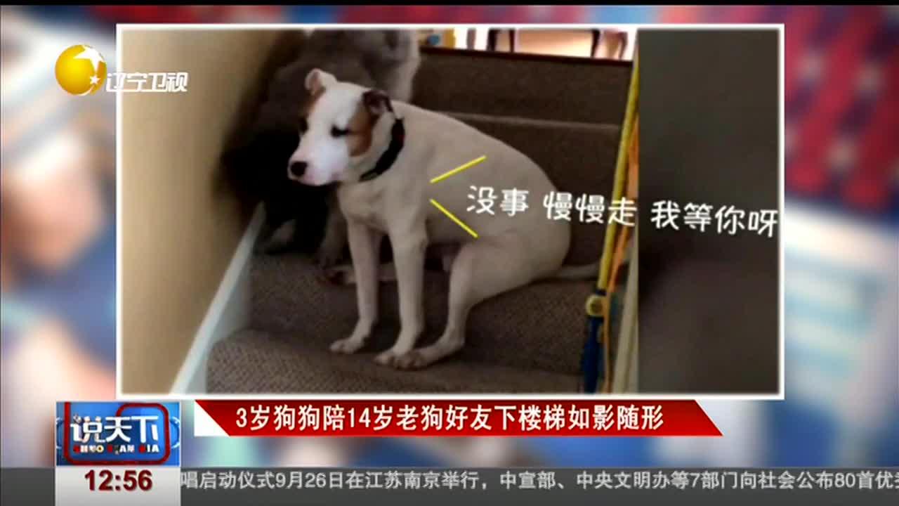 [视频]3岁狗狗陪14岁老狗好友下楼梯如影随形