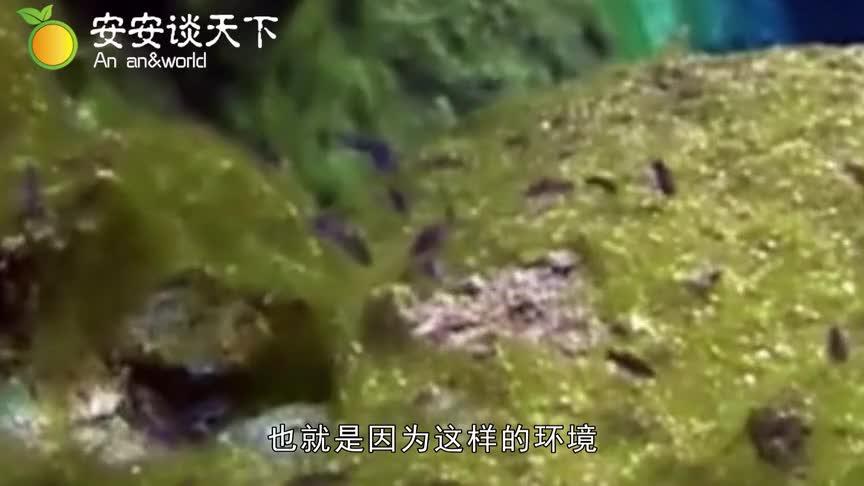 [视频]游弋在沙漠里的鱼 沙海里的精灵