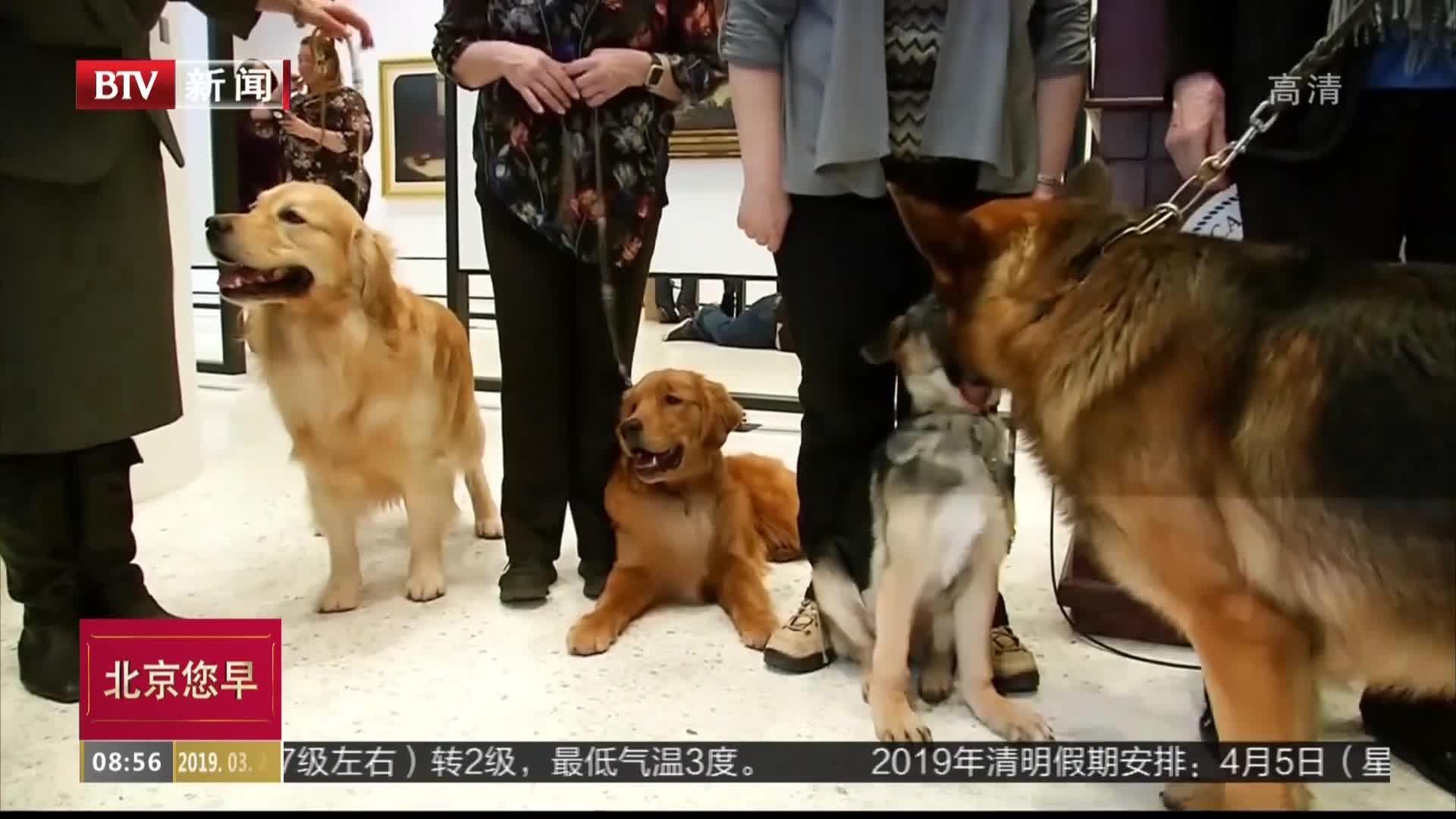 [视频]拉布拉多再登全美最受欢迎犬种榜首