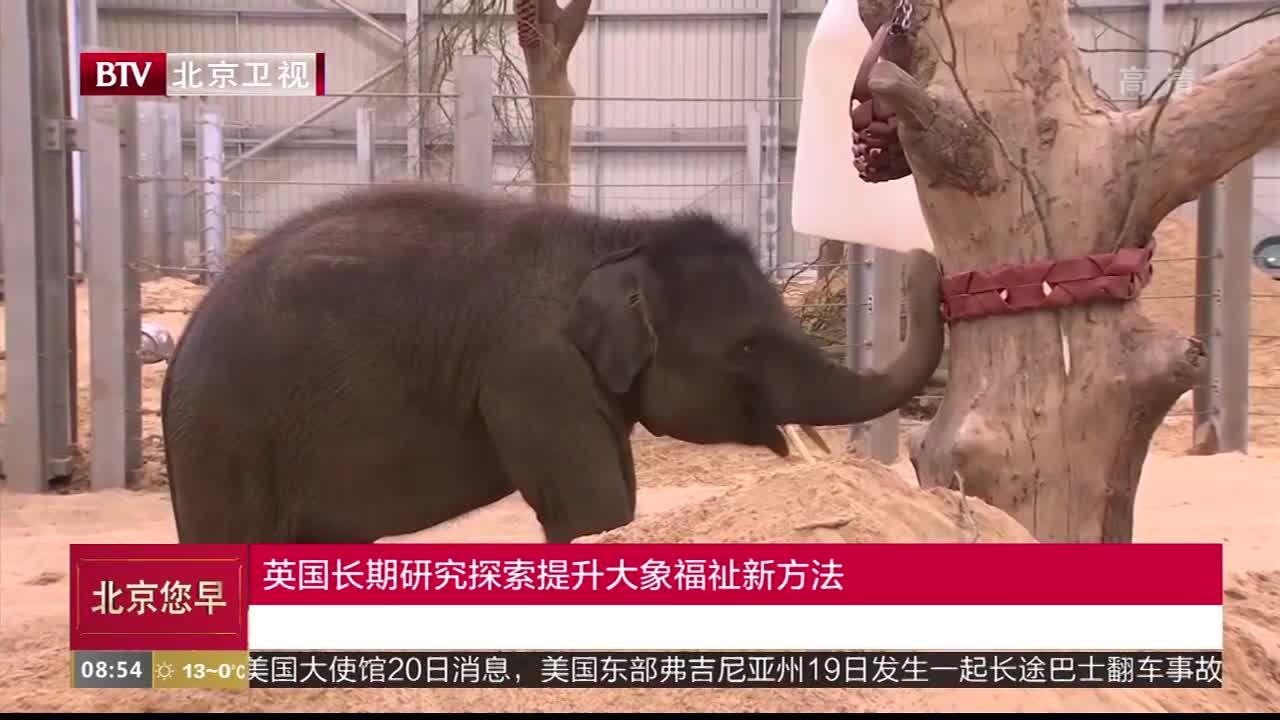 [视频]英国长期研究探索提升大象福祉新方法
