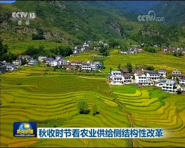 [视频]秋收时节看农业供给侧结构性改革