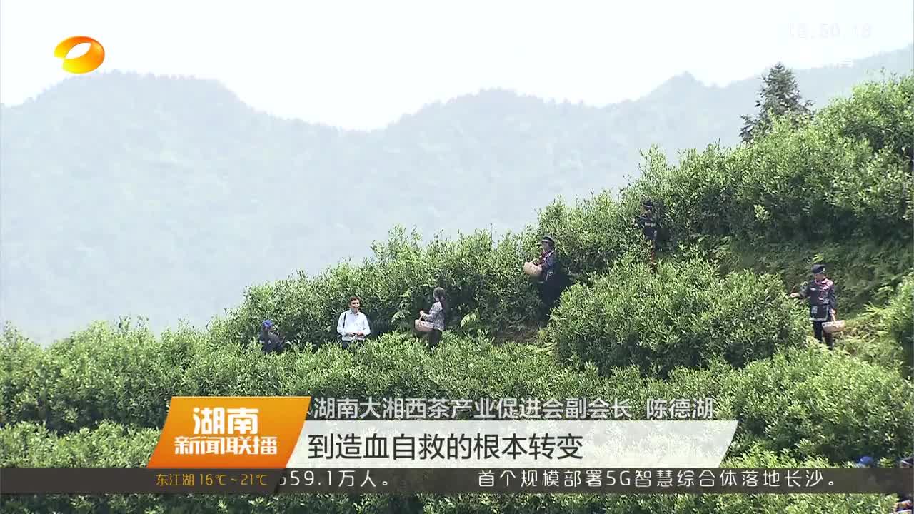 湖南茶产业实施产业+旅游+扶贫模式 助力贫困地区脱贫