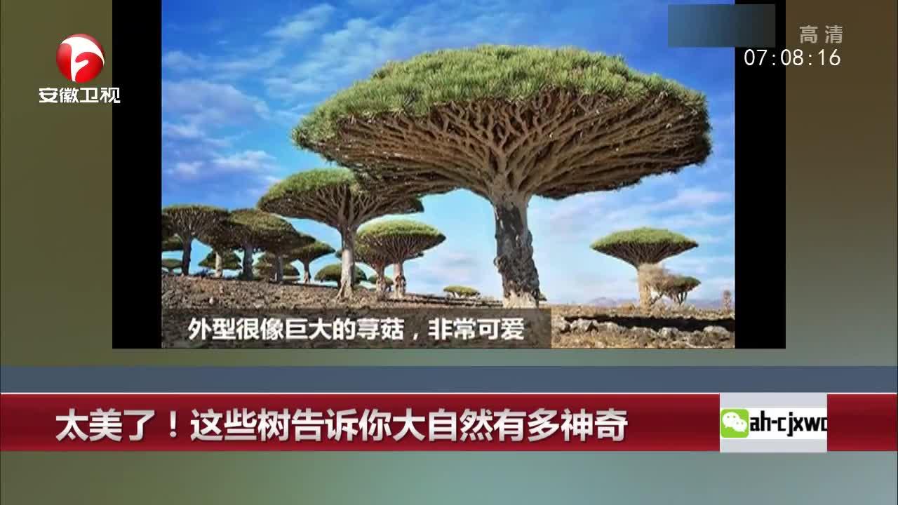 [视频]太美了!这些树告诉你大自然有多神奇