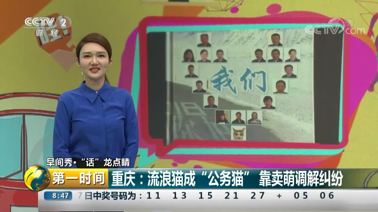 """[视频]重庆:流浪猫成""""公务猫"""" 靠卖萌调解纠纷"""