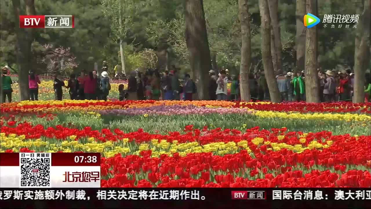 [视频]40万株郁金香盛放北京植物园