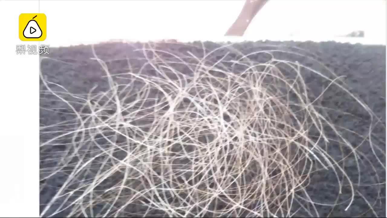 [视频]日本纯手工拔白头发,半小时240元