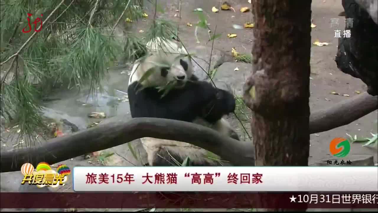 """[视频]旅美15年 大熊猫""""高高""""终回家"""