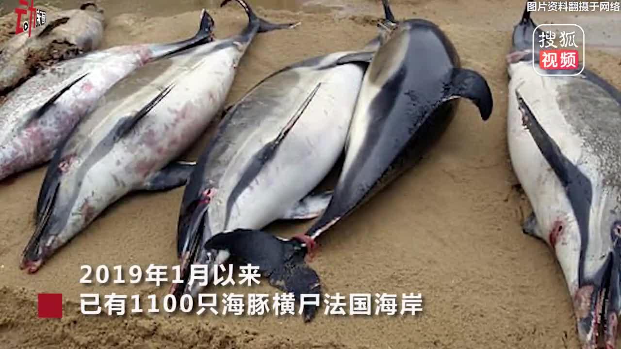 [视频]法国海岸线3个月现1100只死海豚 打破40年纪录 原因成谜