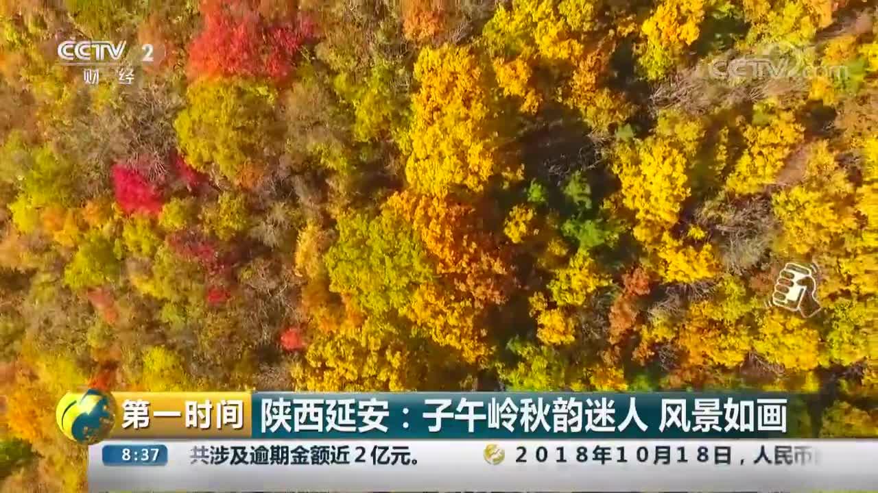 [视频]陕西延安:子午岭秋韵迷人 风景如画