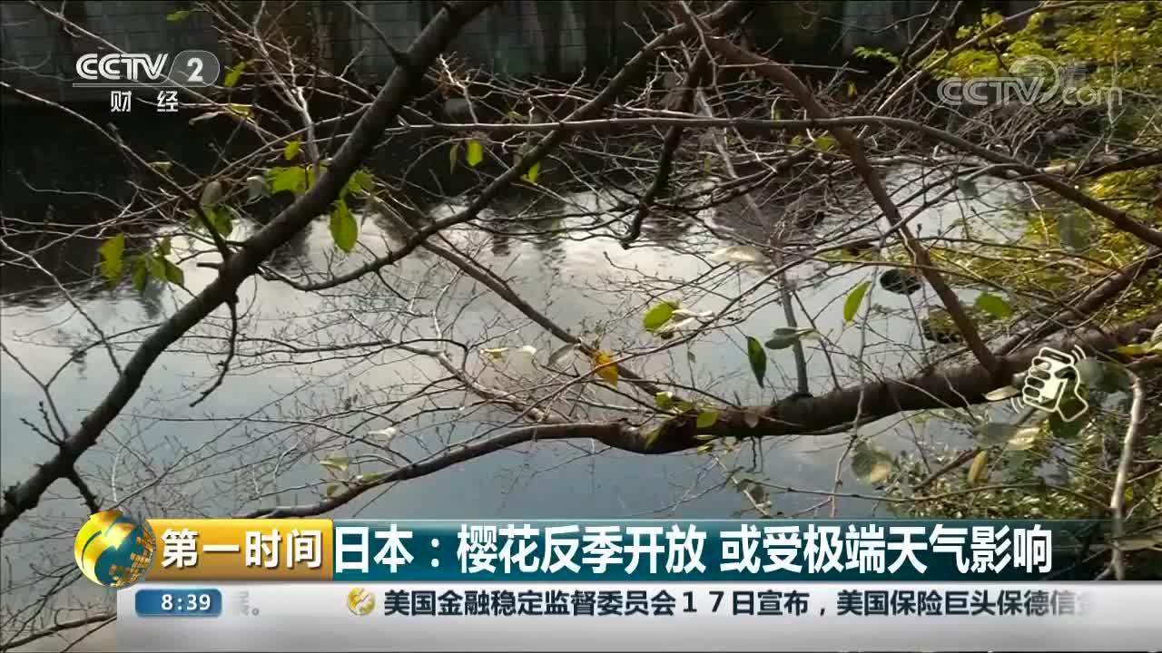 [视频]日本:樱花反季开放 或受极端天气影响