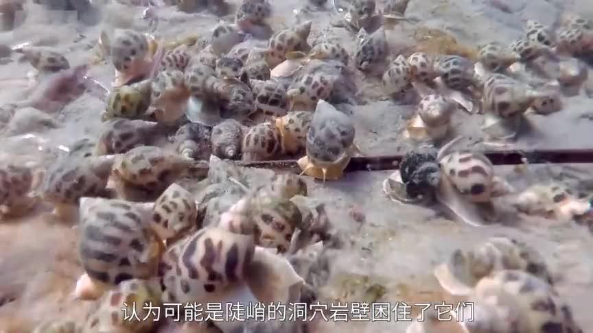 [视频]海上大蓝洞的底部都有什么?