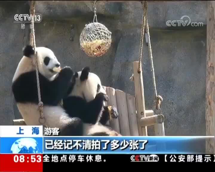 """[视频]上海:三只大熊猫集体""""过生日"""""""