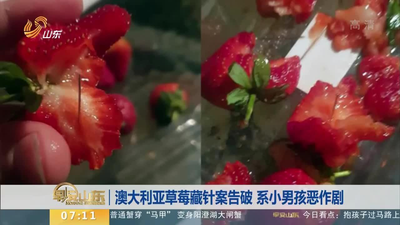 [视频]澳大利亚草莓藏针案告破 系小男孩恶作剧