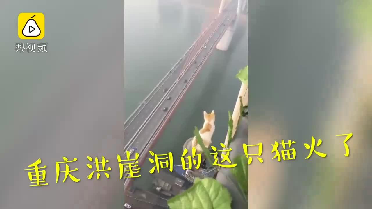 """[视频]真有九条命?""""作死猫""""趴高楼俯视众生"""