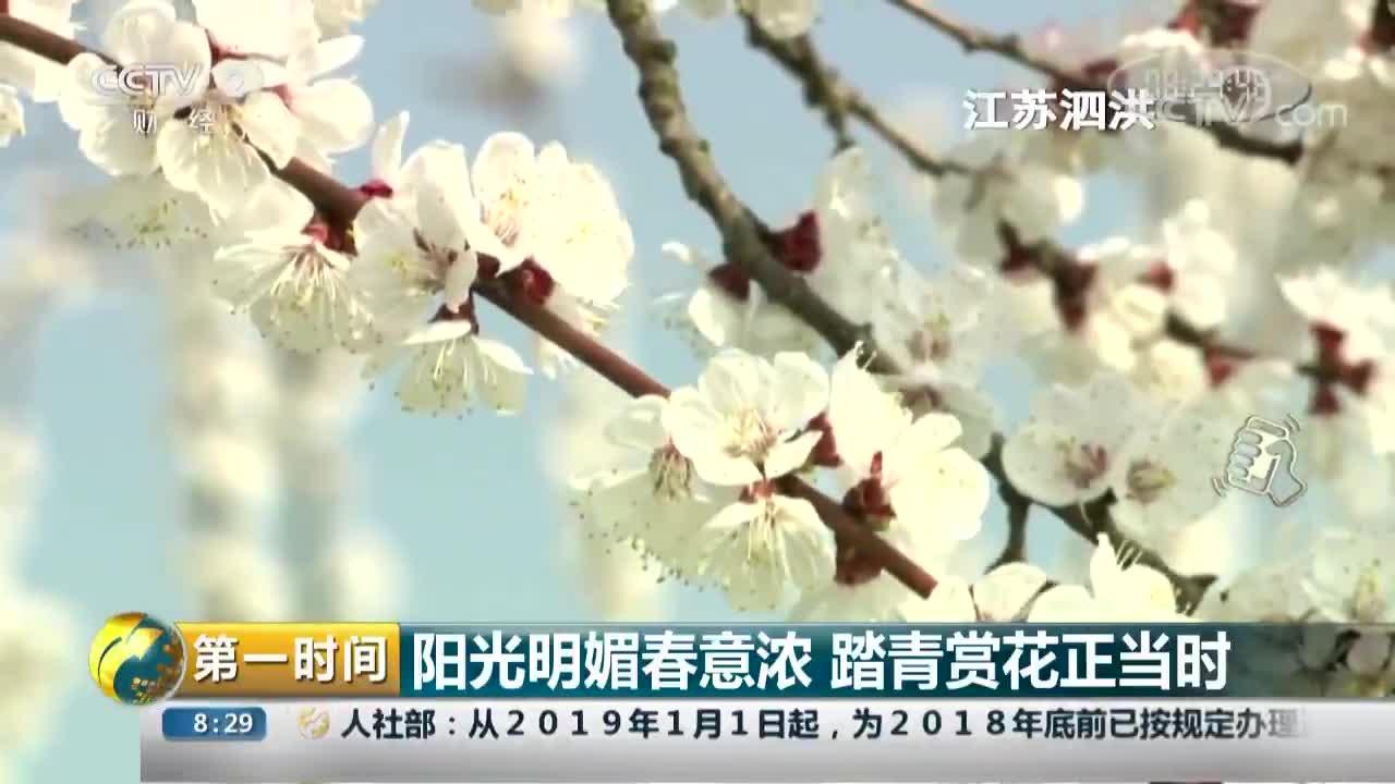 [视频]阳光明媚春意浓 踏青赏花正当时