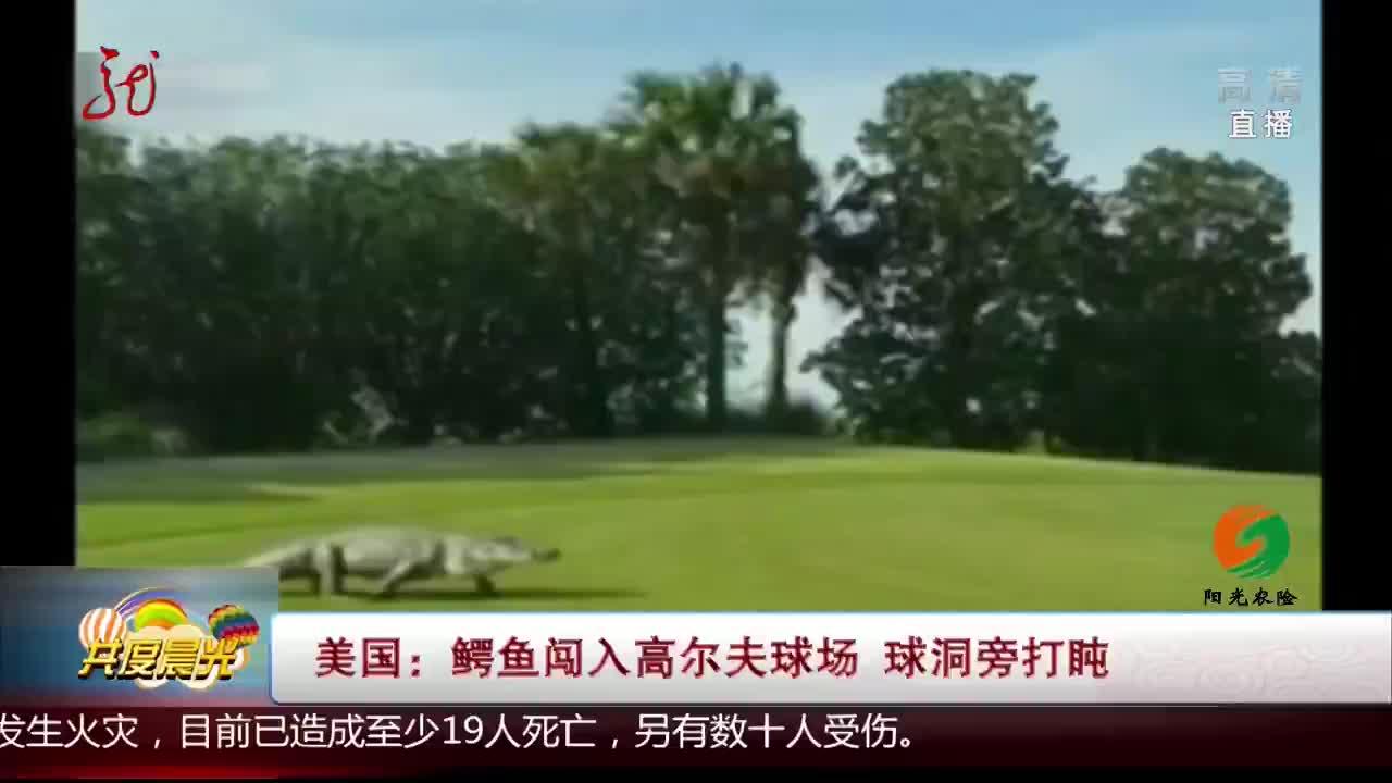 [视频]美国:鳄鱼闯入高尔夫球场 球洞旁打盹