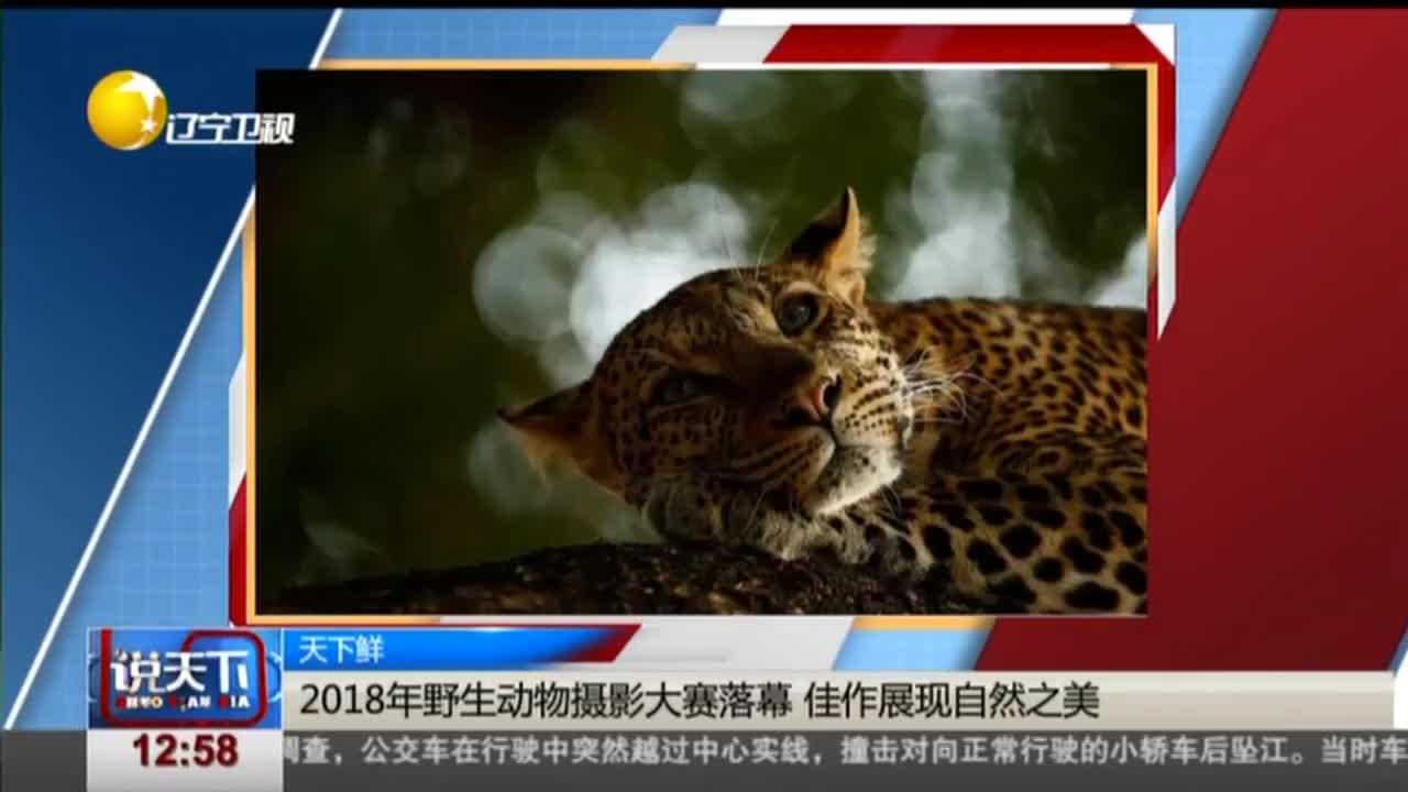 [视频]2018年野生动物摄影大赛落幕 佳作展现自然之美
