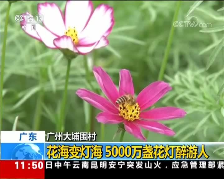 [视频]广州大埔围村:花海变灯海 5000万盏花灯醉游人