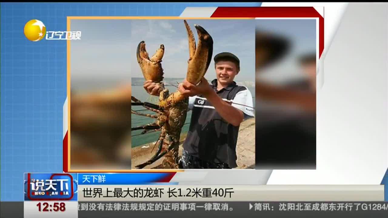 [视频]世界上最大的龙虾 长1.2米重40斤