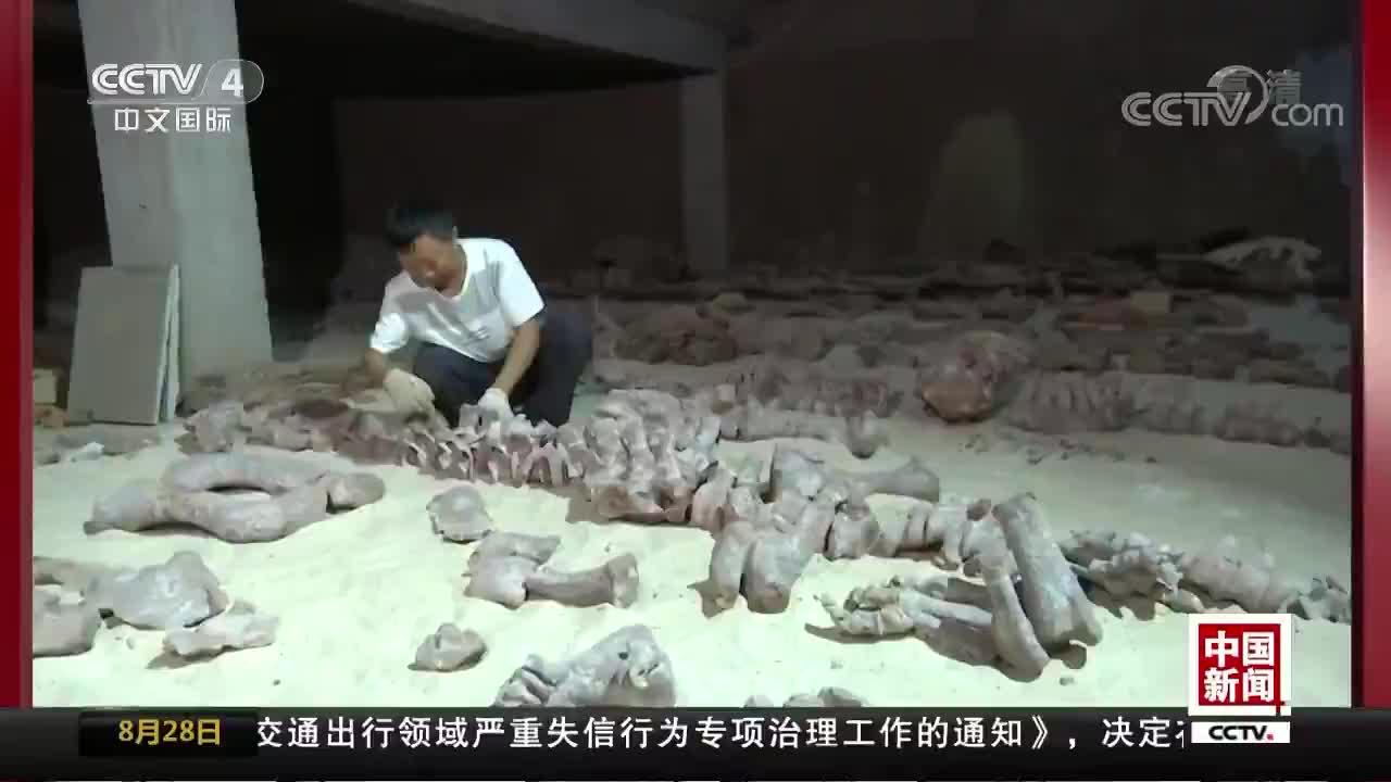 [视频]楚雄禄丰发现恐龙新属种——程氏星宿龙